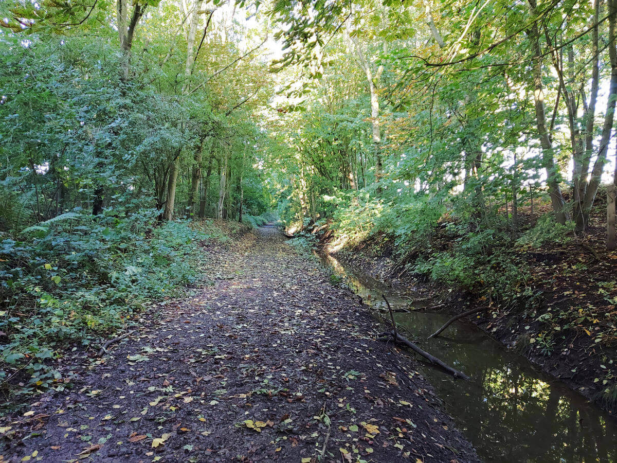 A woodland pathway leading straight ahead into the trees. The sun is shining through the leaves. The ground is littered with leaves and there is a muddy stream to the right.