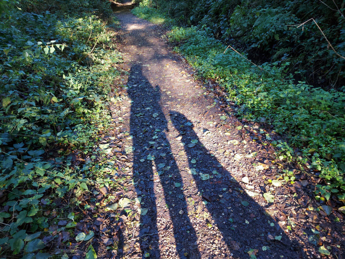 The sun is behind Christine and the dog and it throws their shadows onto the woodland path.